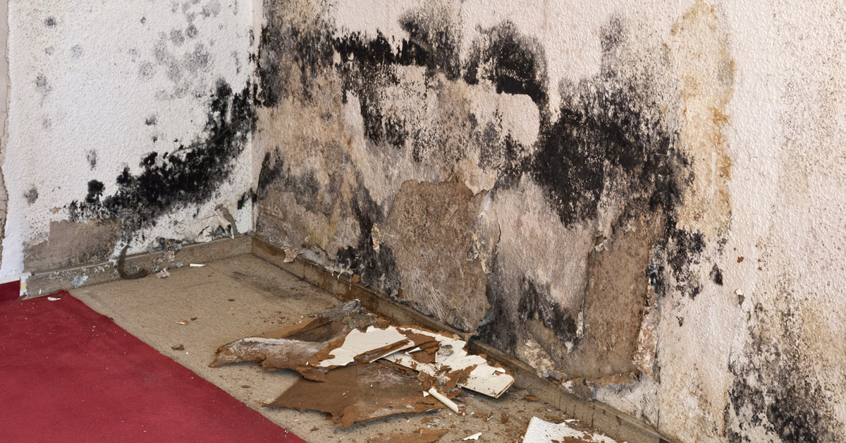 mold removal chula vista
