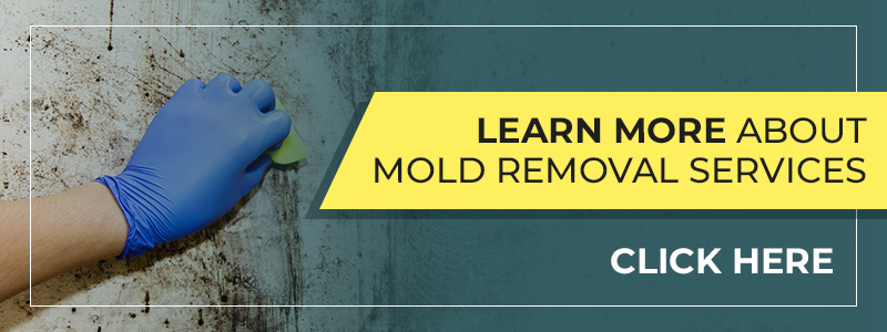 Cleaning mold with a sponge