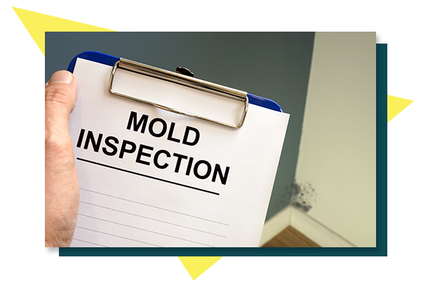 Picture of mold inspection