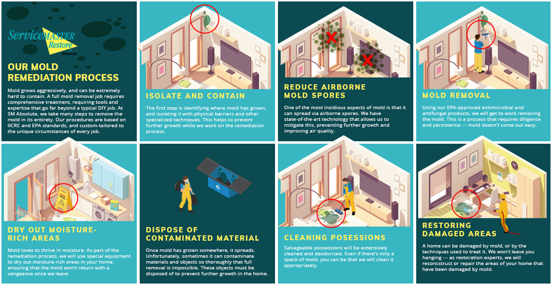 Mold Remediation Infographic
