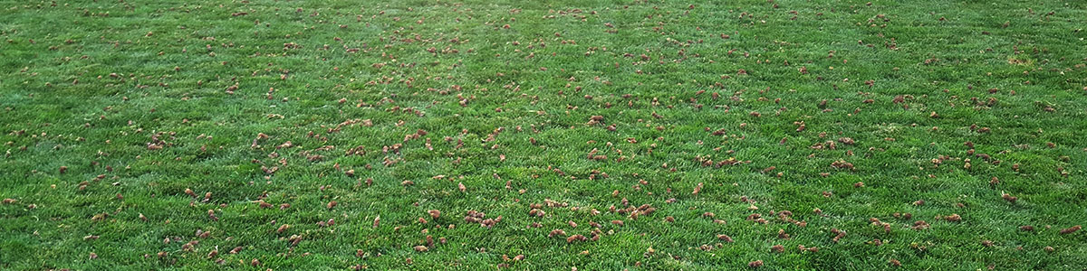 grass texture hd realistic aerationbanner lawn aeration benefits lawn care fort collins aerator co aerate sonrise