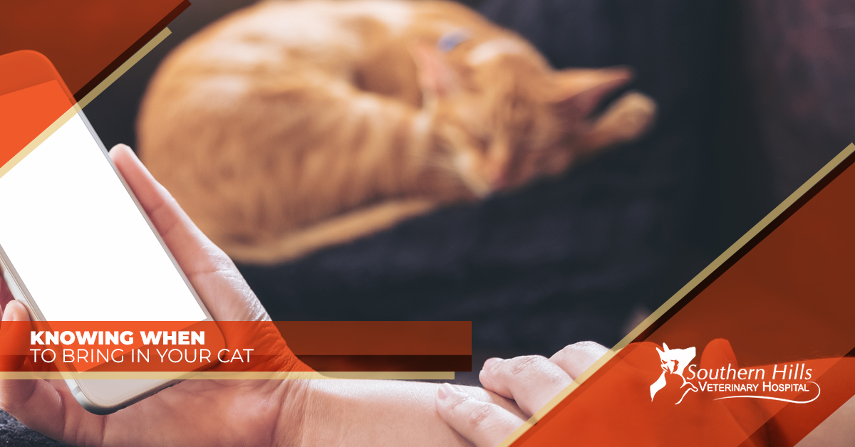 Veterinarian in Tulsa - Knowing When to Bring in Your Cat | Southern Hills Veterinary Hospital