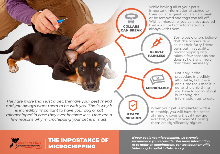 SHOULD YOU GET YOUR PET MICROCHIPPED? – Page 9182052643