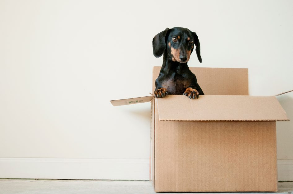 An image of a puppy in a cardboard box.