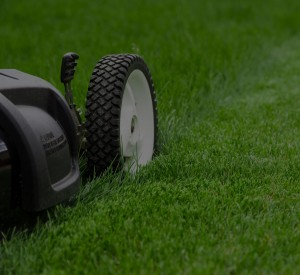Lawn care services in St. Augustine.