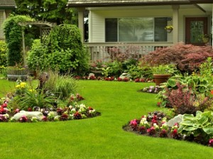 gardening St. Augustine