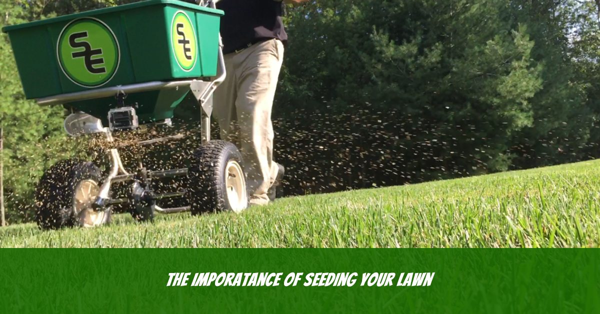 Lawn Maintenance Blackstone: When To Reseed Your Lawn