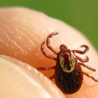 Home Care Services in Glenolden PA: Warning About Spring-Pests