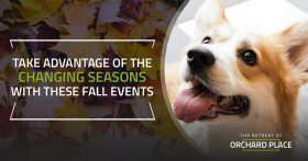Take Advantage of the Changing Seasons With These Fall Events