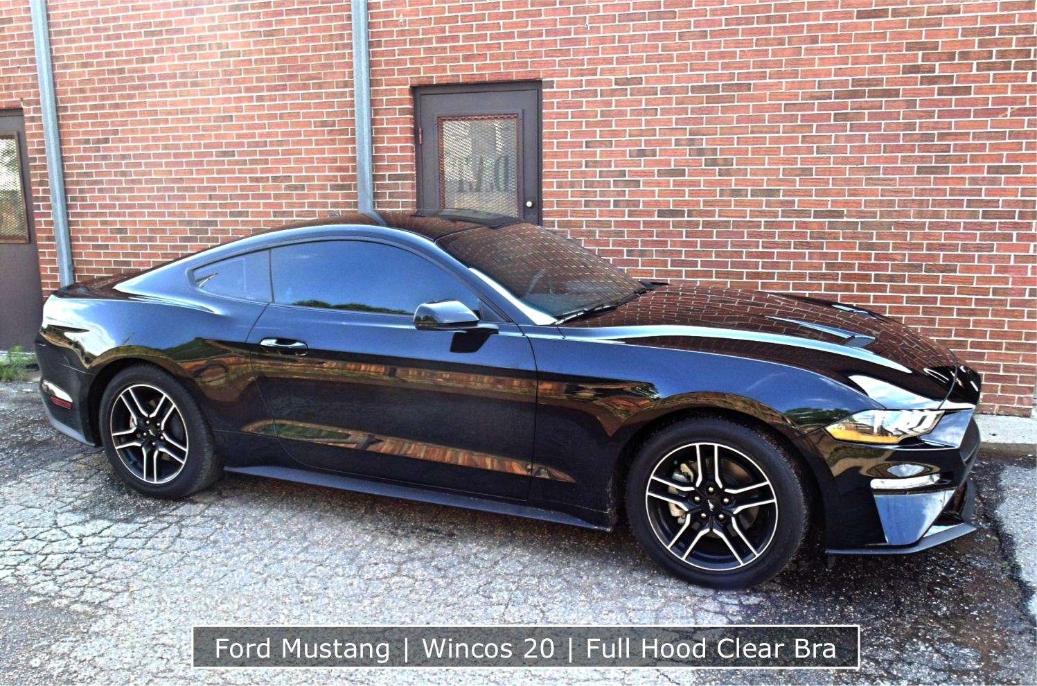 Mustang With Tint And Clear Bra
