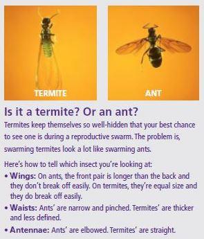 antsvstermites
