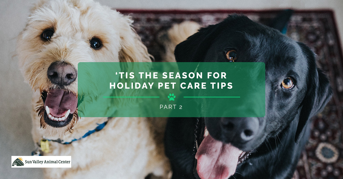 Pet Surgery Tis The Season For Holiday Pet Care Tips Pt 2