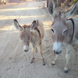 California guided tours Teresa's Tours of Baja