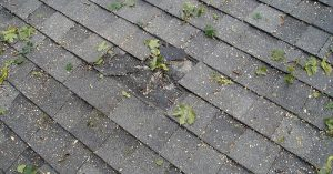 Texas Star Roofing Repairs - tree damage
