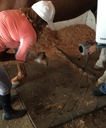 How many thermographers does it take to scan a hoof?