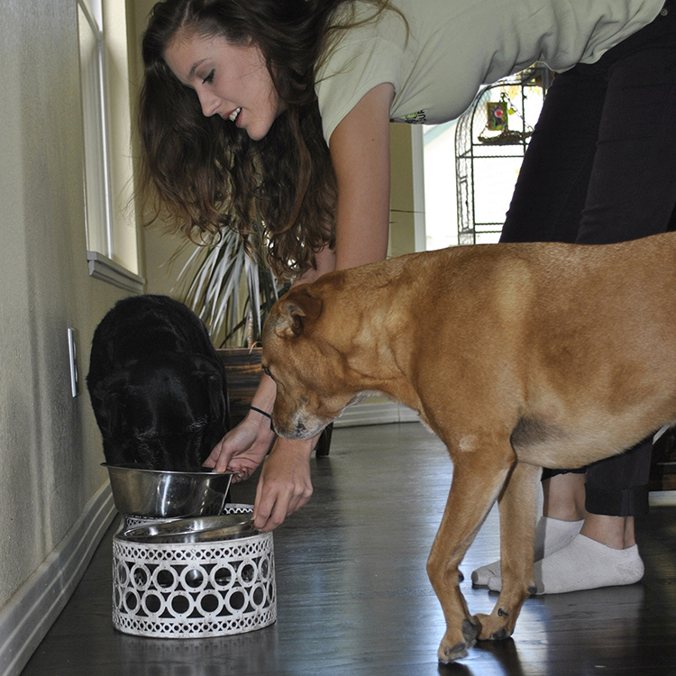 Pet Sitting - Family-Owned Pet Groomers In Greeley | The Dog