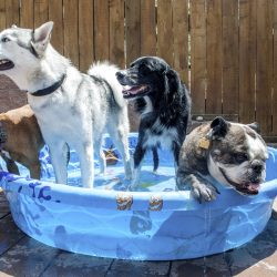 Gallery nationally certified master groomers in fort collins the gallery nationally certified master groomers in fort collins the dog pawlour solutioingenieria Choice Image