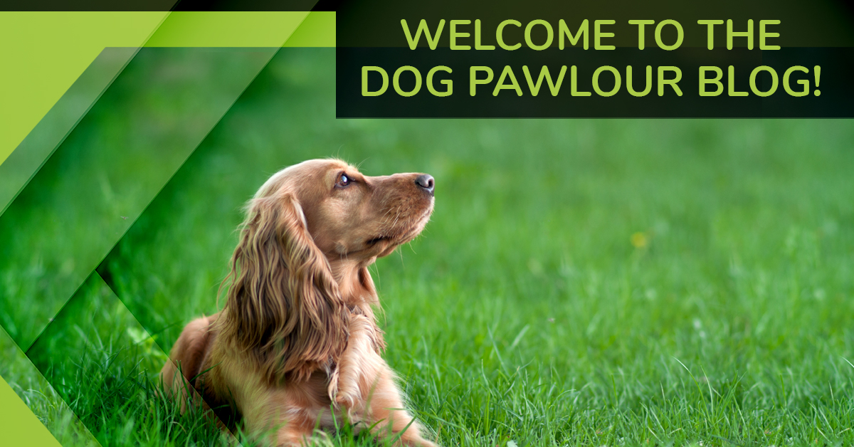 Dog grooming fort collins welcome to the dog pawlour blog the dog pawlour solutioingenieria Choice Image