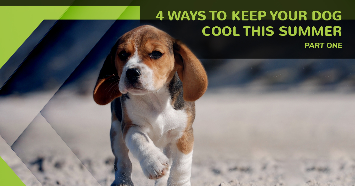 Dog Grooming Greeley 4 Ways To Keep Your Dog Cool This