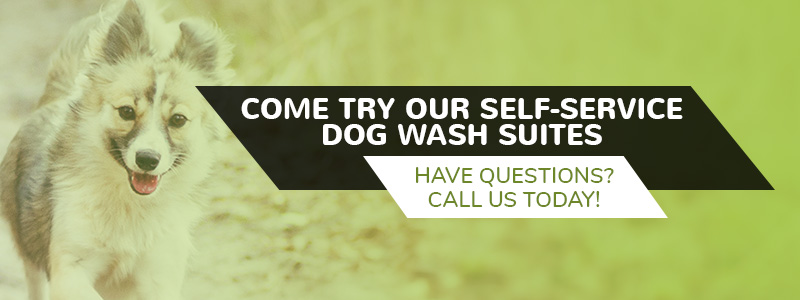 Self wash dog grooming experience the dog pawlour difference in a self dog wash suite is meant to be comfortable for your dog to make the dog washing process a lot stressful for you and your pup solutioingenieria Gallery