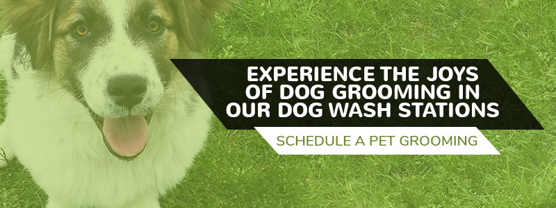 Self wash dog grooming experience the dog pawlour difference in our flexible sprayers make it easy to get those hard to reach places when rinsing the shampoo off of your dog solutioingenieria Gallery