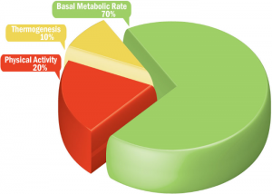 metabolism image
