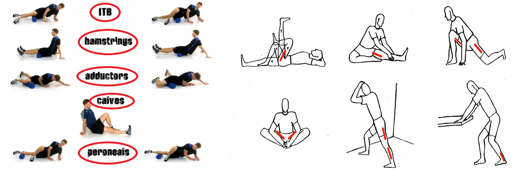 The Fitness Trainer Academy Corrective Exercise