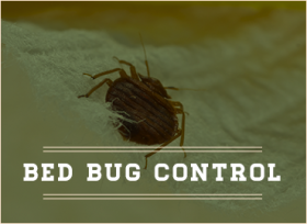 Control bed bugs with pest control from Noble Way pest control