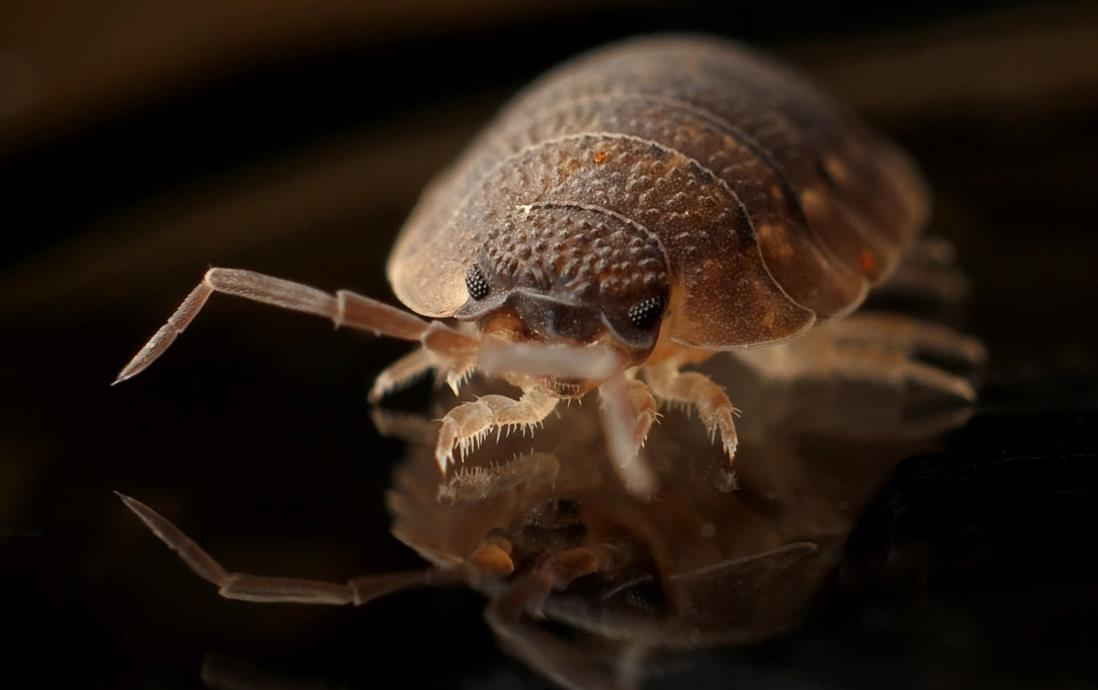 Denver Bed Bug Treatments