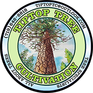 TipTop Tree Cultivation