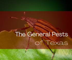 General Pests