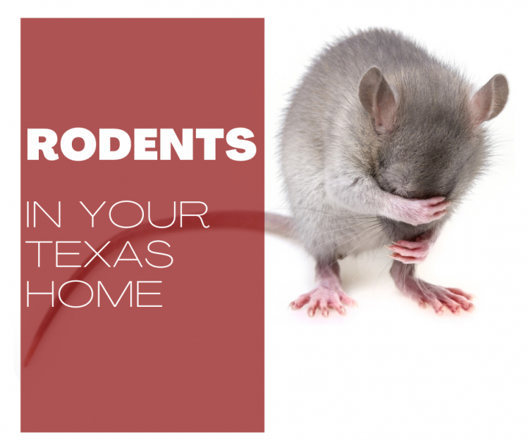 Rodents in your Texas Home