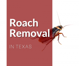 Roach Removal