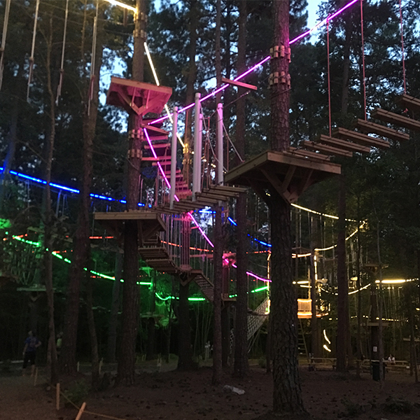 Fun Tree Top Activities for Kids in Raleigh