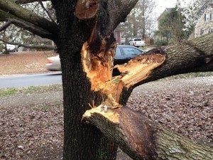 Storm Damage Tree Removal Service: Storm damage can cause a lot of harm to trees and property. Our team can clean it up! We also offer preventative services like cabling and proper pruning. Our arborists will assess the tree and let you know if it can be saved. If not, we can take it down as safely as possible.