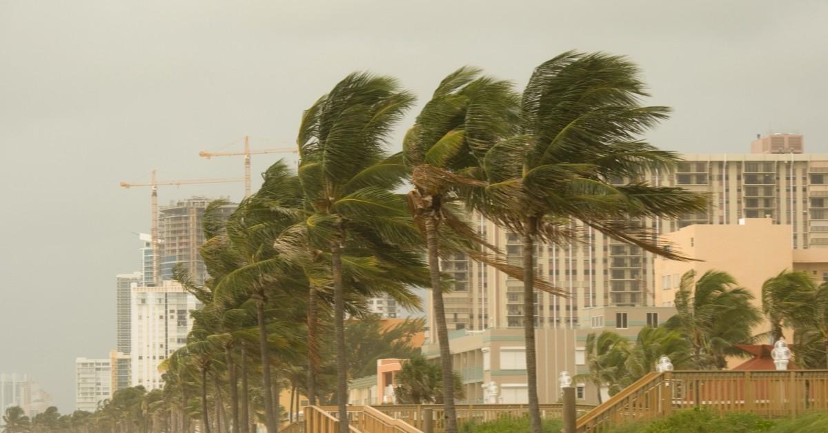 hurricane damage to trees mooresville tree tech tree service