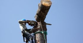 tree removal tree tech tree service mooresville