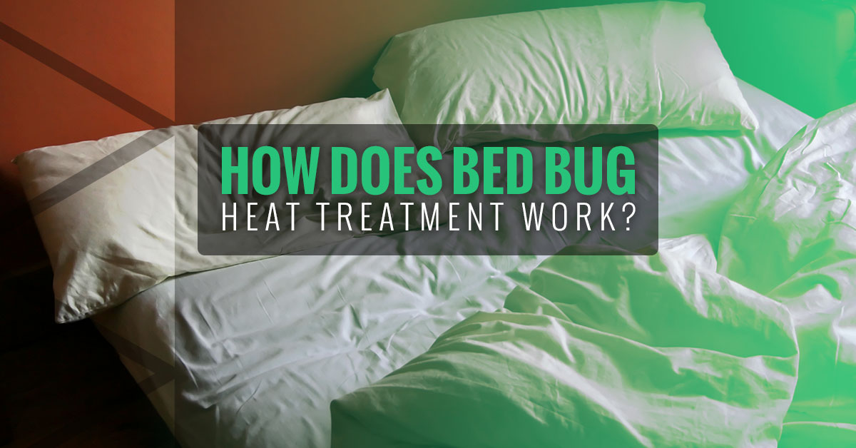 Fastest Way To Get Rid Of Bed Bugs How Heat Treatment Works