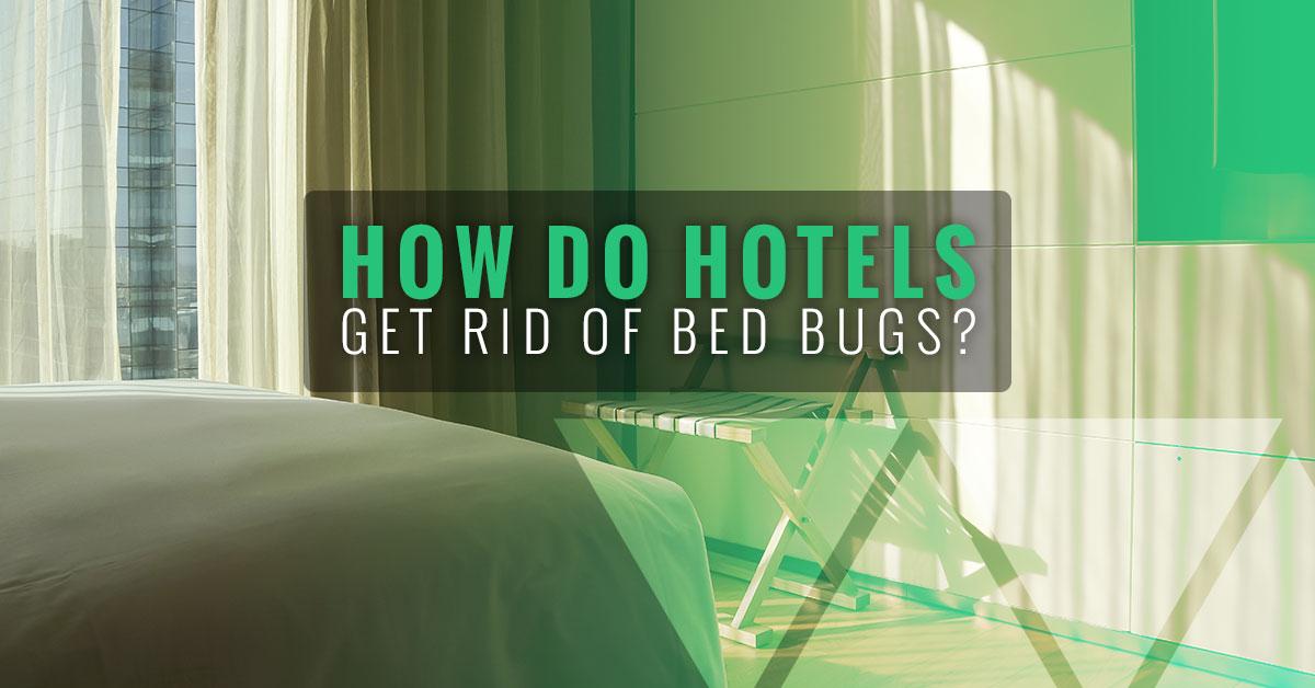 Bed Bug Room Heater