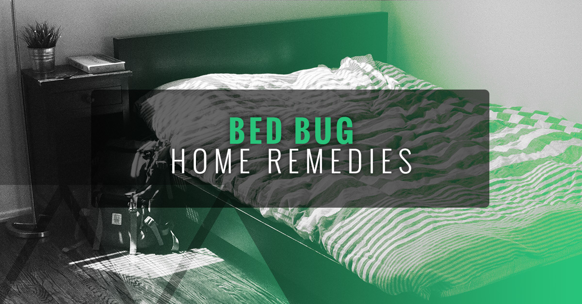 Electric Bed Bug Heaters Bed Bug Home Remedies