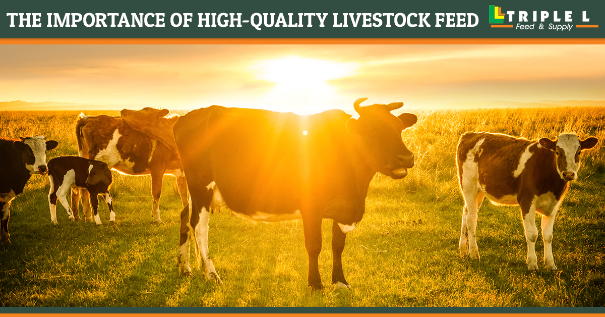 livestock feed store near me