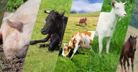 An image of various livestock.