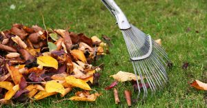 A rake pulling orange leaves from green grass.