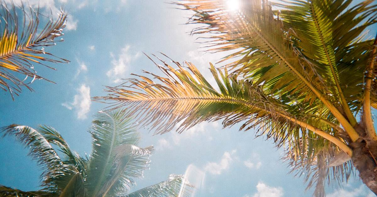 The spray of palm tree leaves against a blue sky.