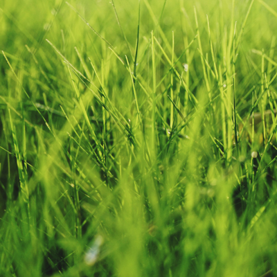 A close up of grass blades.