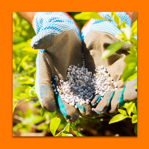 A pair of hands hold up a handful of fertilizer.
