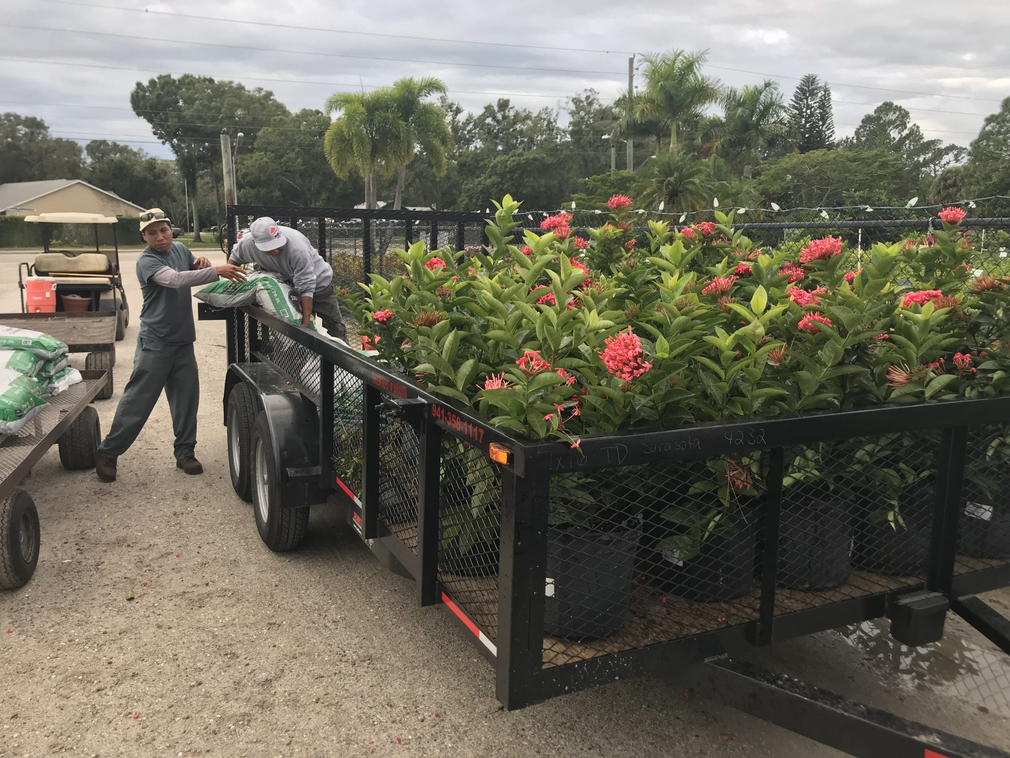 A series of tropical, flowering plants rest on the back of a trailer.