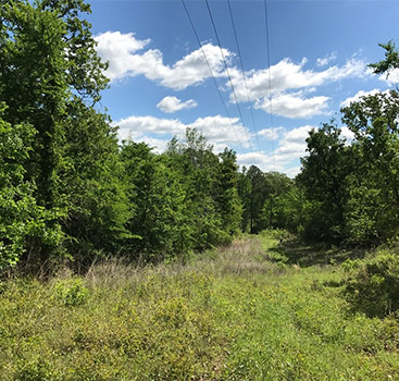 Texas Acres - Owner Financed Land For Sale, East Texas