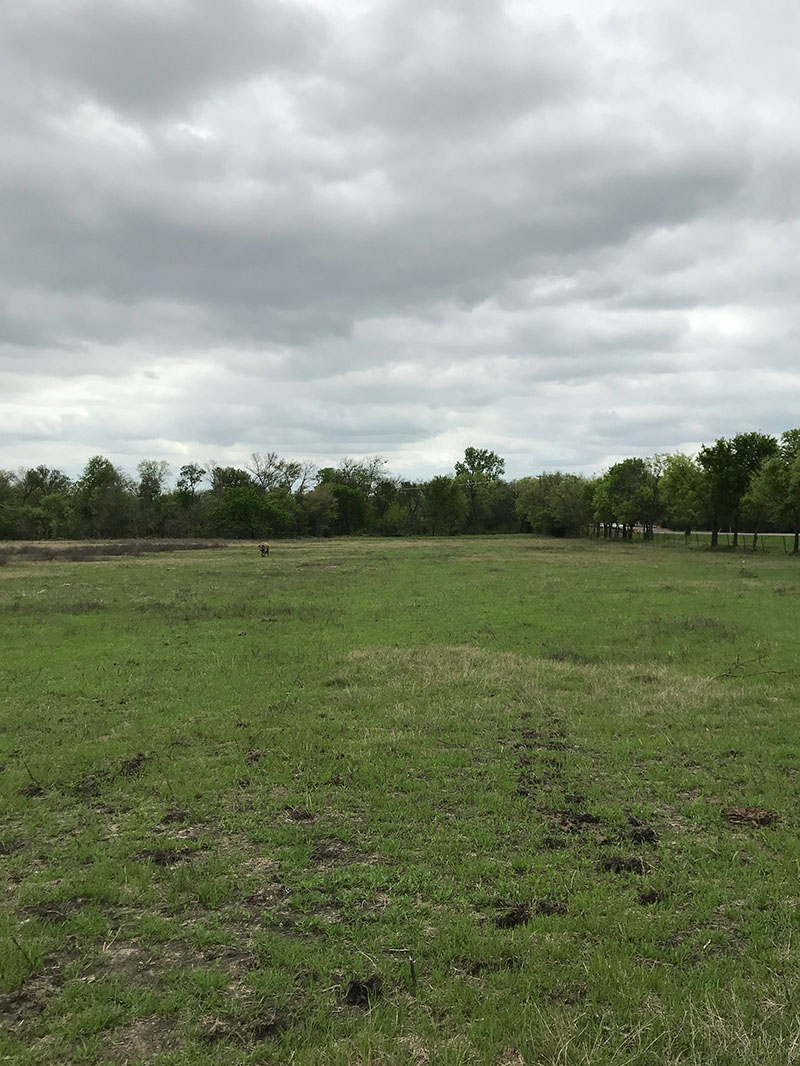 Land For Sale: Get Owner Financing Today - Terrell, TX
