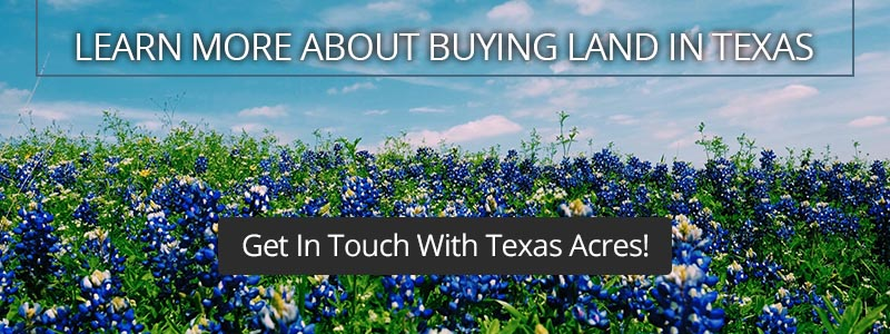 Call to Action about buying land in Texas, with blue flowers in a field.